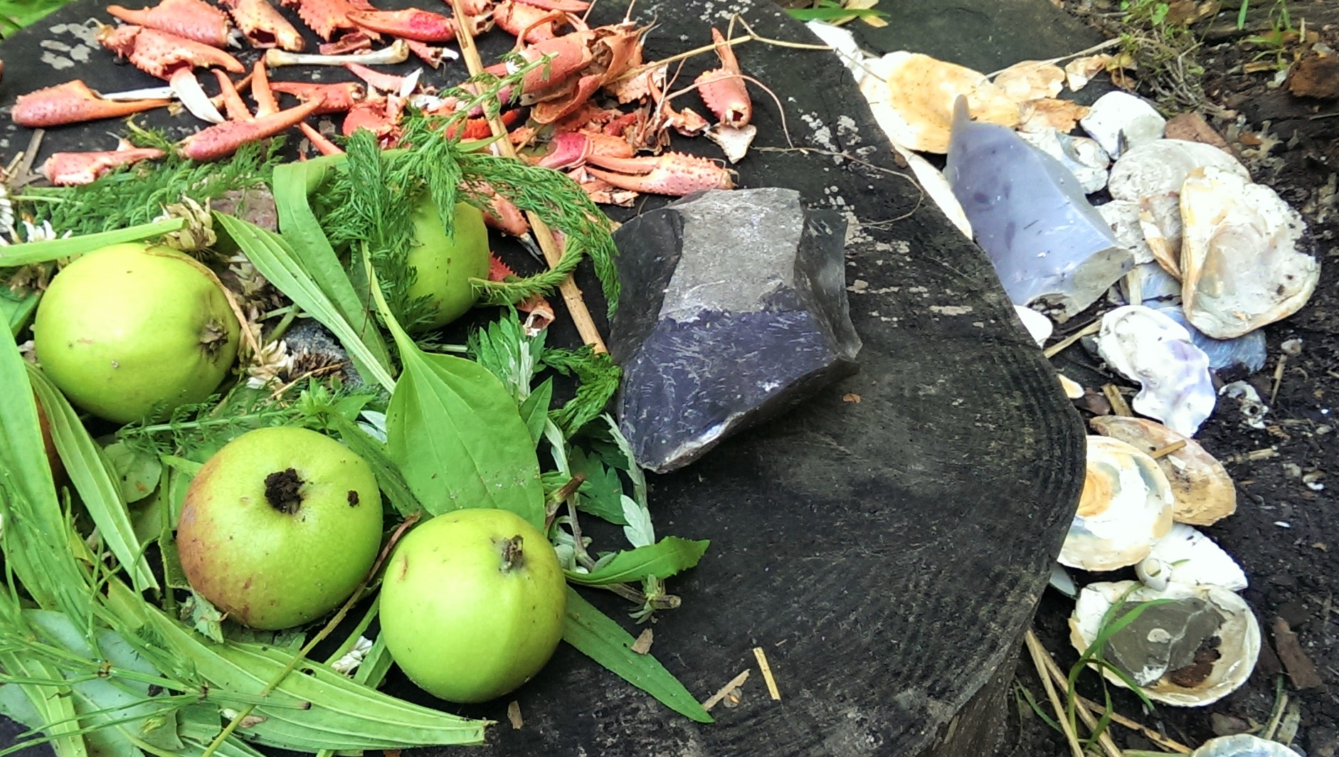 Stenalder – forhistorisk mad